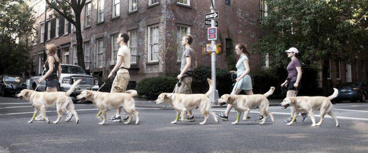 nyc-dog-walkers